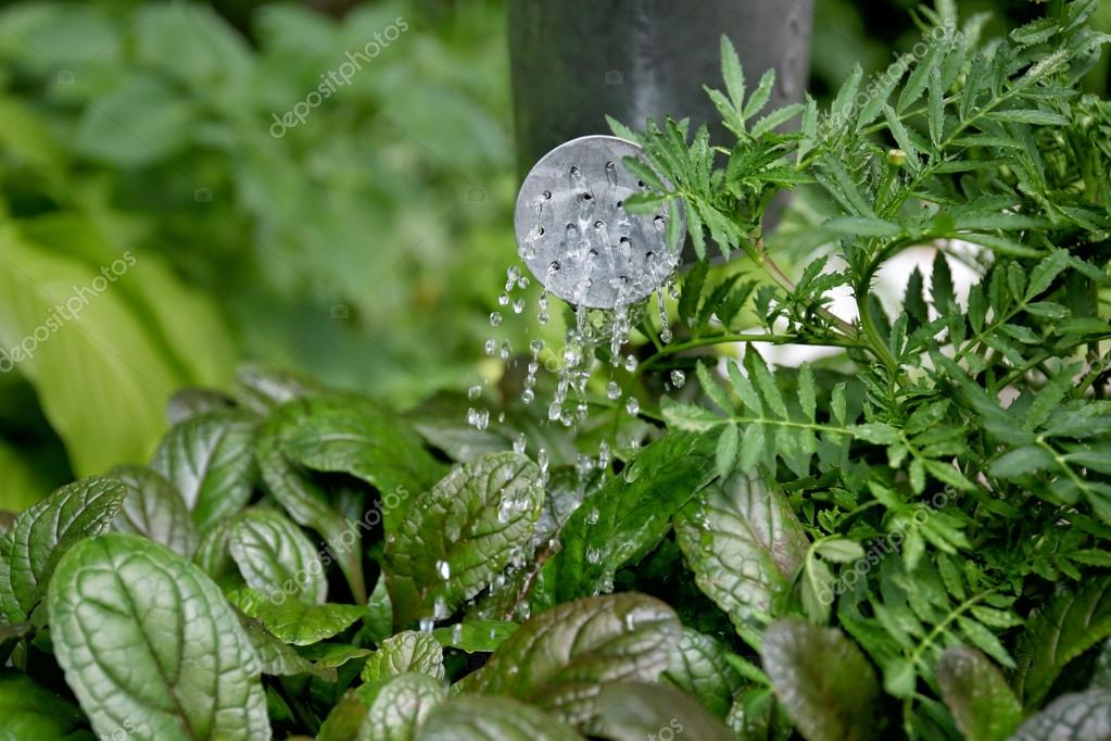 Plants watereining in garden