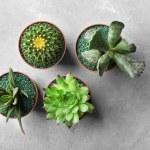 кактус скала уход в домашних условиях