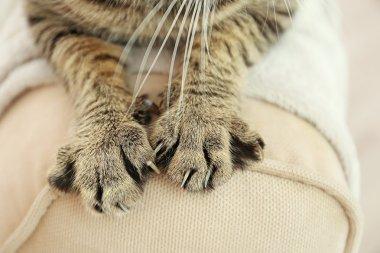 Tabby cat paws