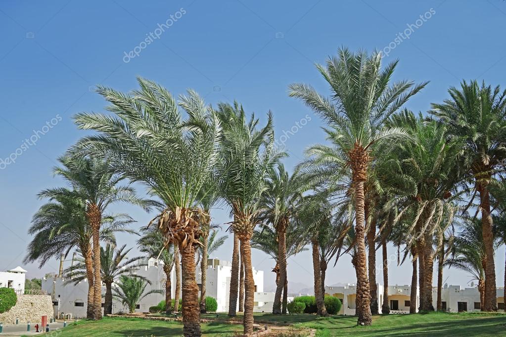 Palm grove in a luxury hotel