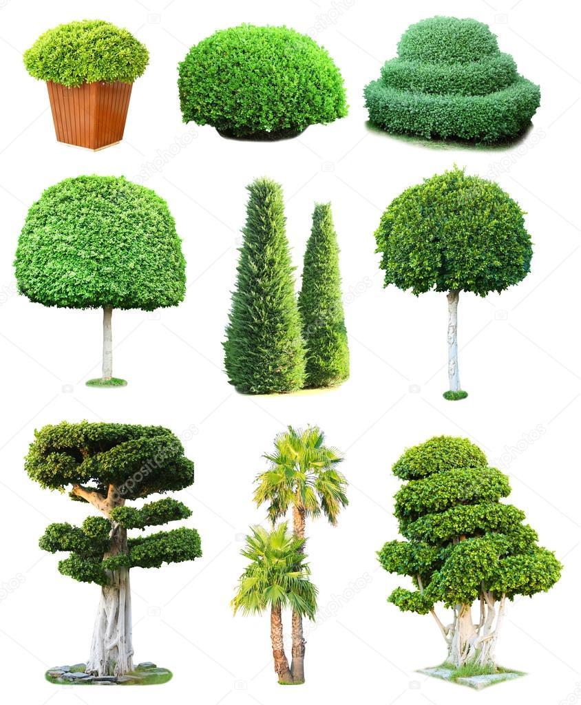 Collage de verdes rboles y arbustos aislados en blanco - Arboles y arbustos ...