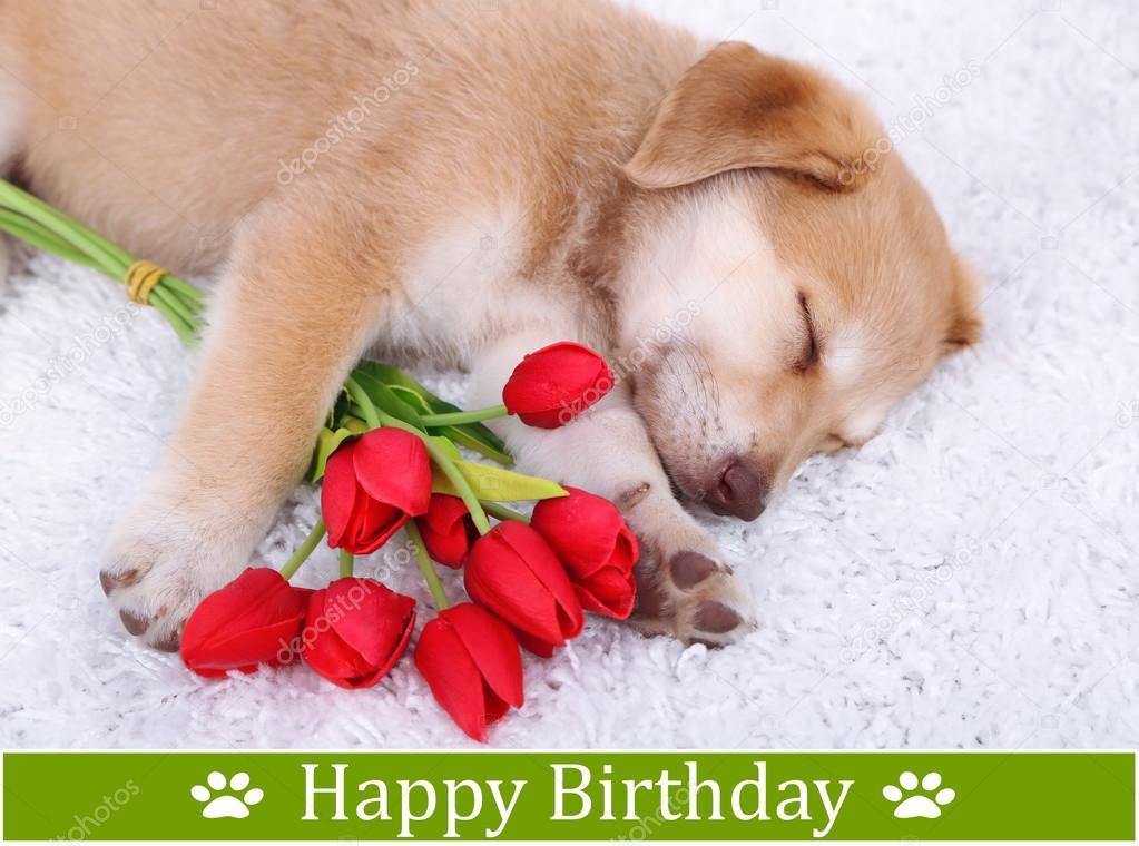 birthday postcard cute golden retriever puppy stock
