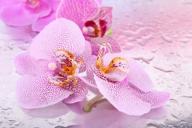Tropical orchid flowers