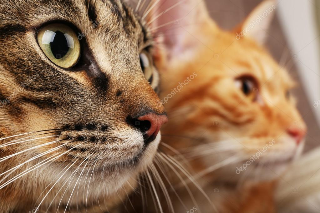 Nice chattes