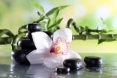 Fotografie Wellness kameny a bílá orchidej
