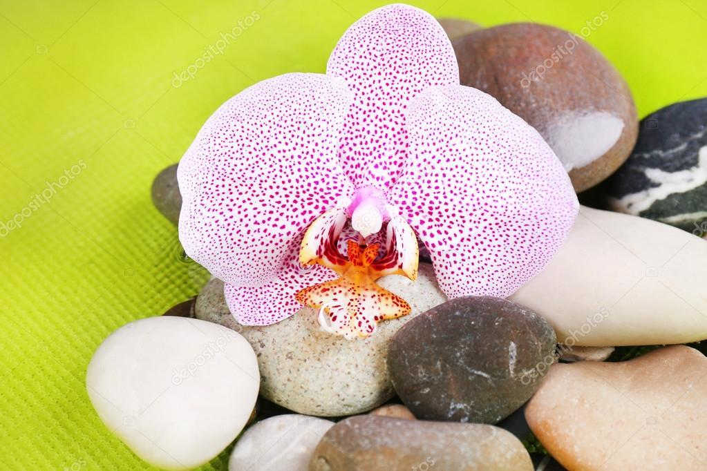 Zusammensetzung Mit Orchideenblume Und Steinen Im Wasser Auf