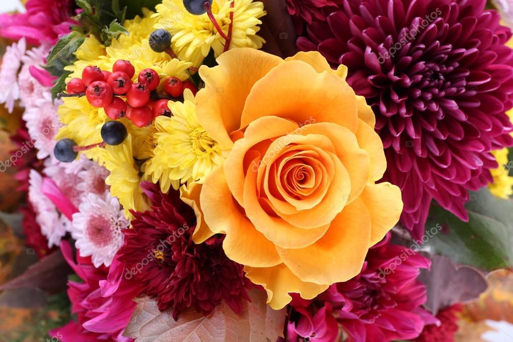 Открытка осенний букет цветов, кота картинки прикольные