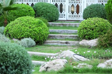 Landscaping in yard