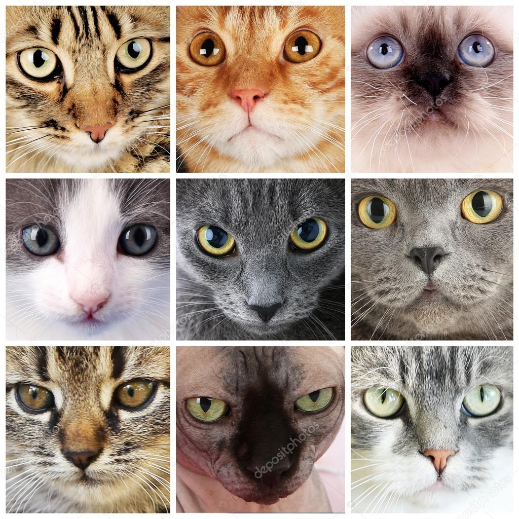 Cat Faces Best Cat And Kitten Image And HD 2017