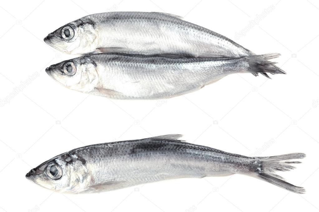 Black Capelin Fish | Fresh Fish Isolated On White Stock Photo C Belchonock 61024835