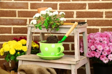 Flowers in pot on stepladder