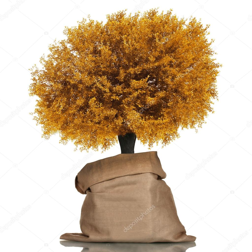 Golden tree in sackcloth bag isolated on white