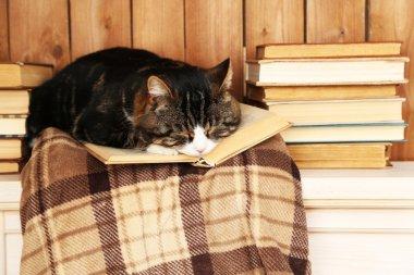 Cute cat with book