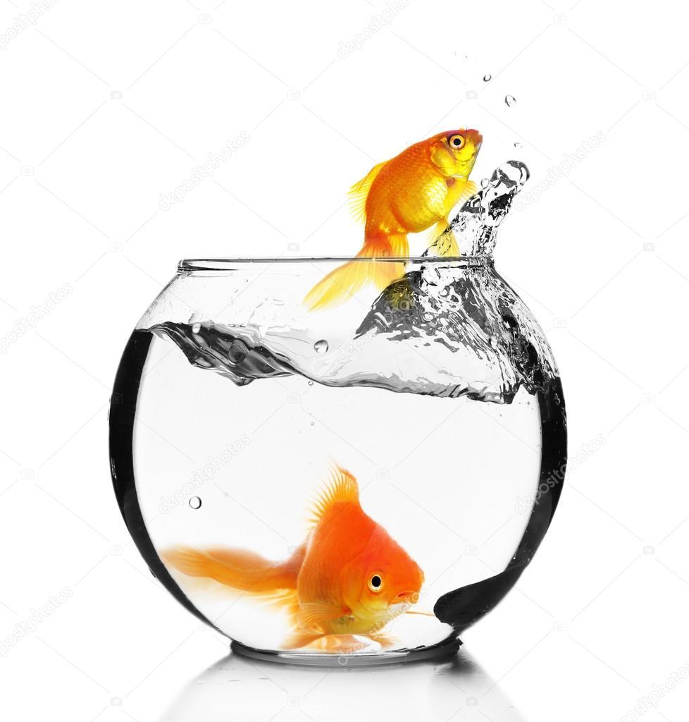 Goldfish Jump Out Of The Aquarium Isolated On White Stock Photo