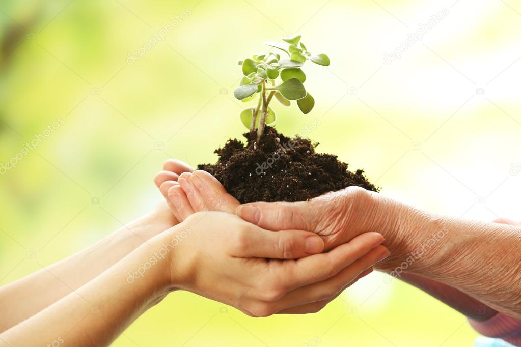 Hands of elderly and young women holding plant, on light background