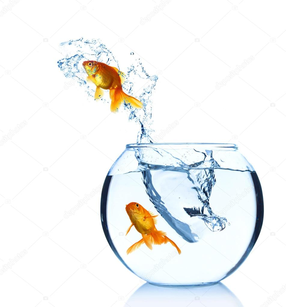 Goldfish Jump Out From Aquarium Isolated On White Stock Photo