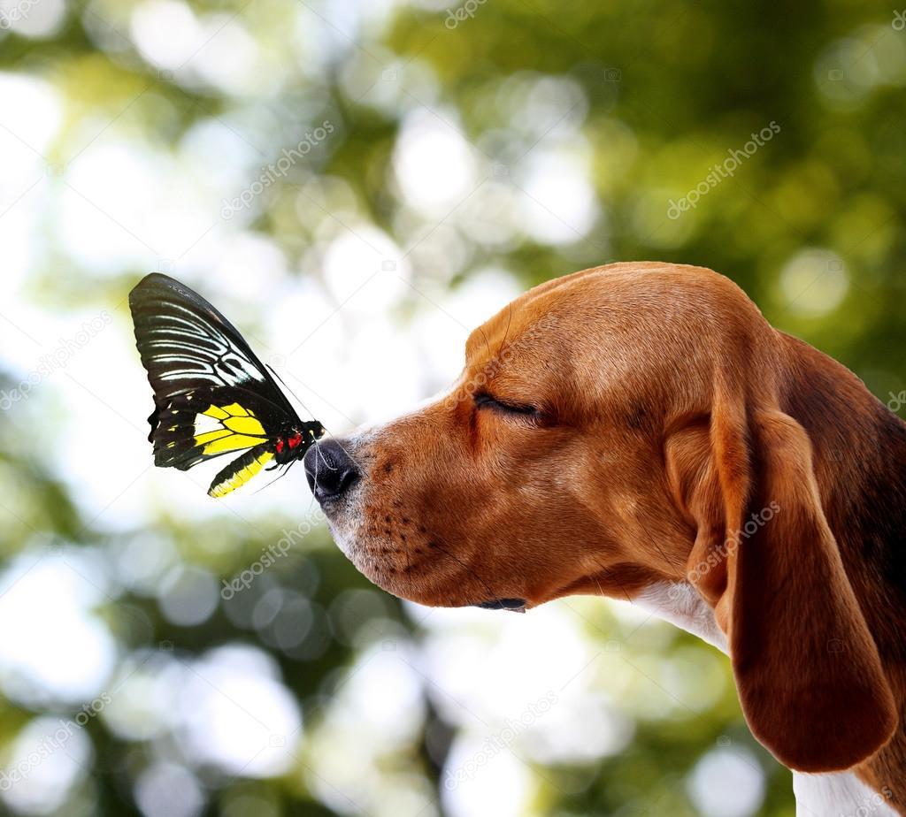 Resultado de imagem para cachorro com borboleta no nariz