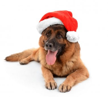 Funny cute dog in Christmas hat isolated on white
