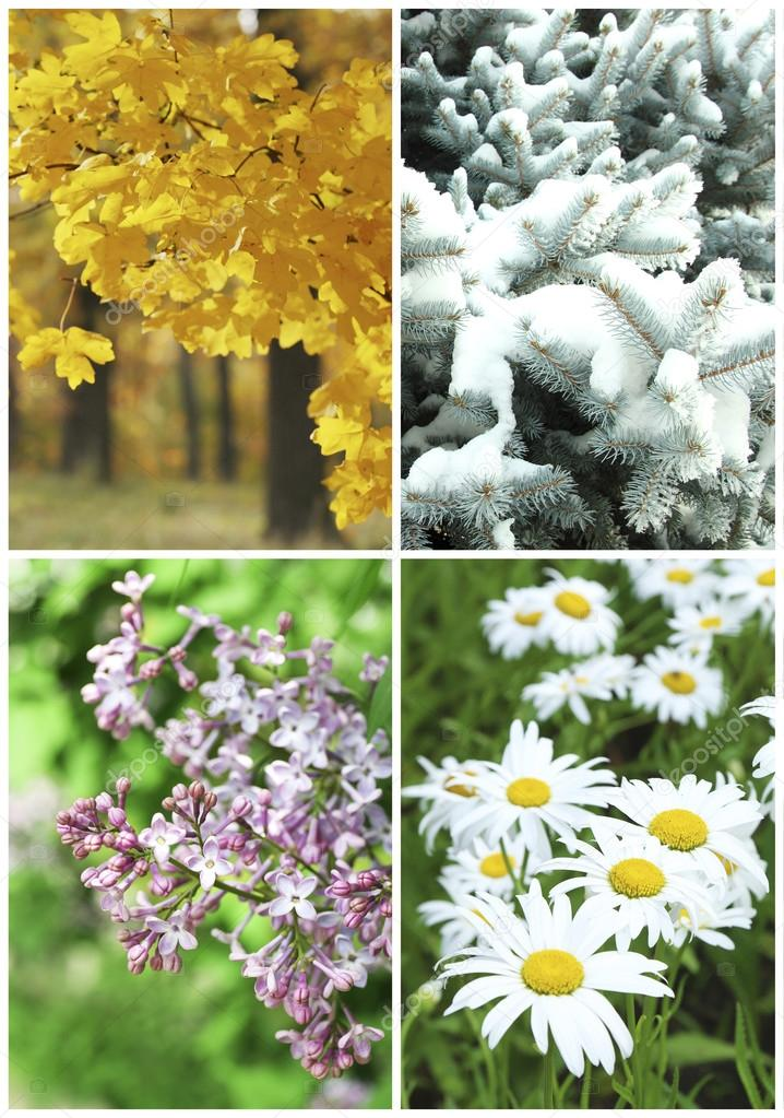 Four seasons collage: winter, spring, summer, autumn