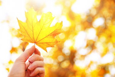 Beautiful autumn leaf in hand on sunny nature background