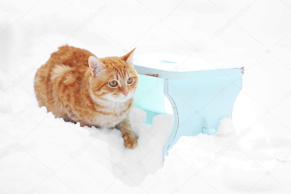Gatto sveglio dello zenzero su sgabello di legno di colore sul fondo