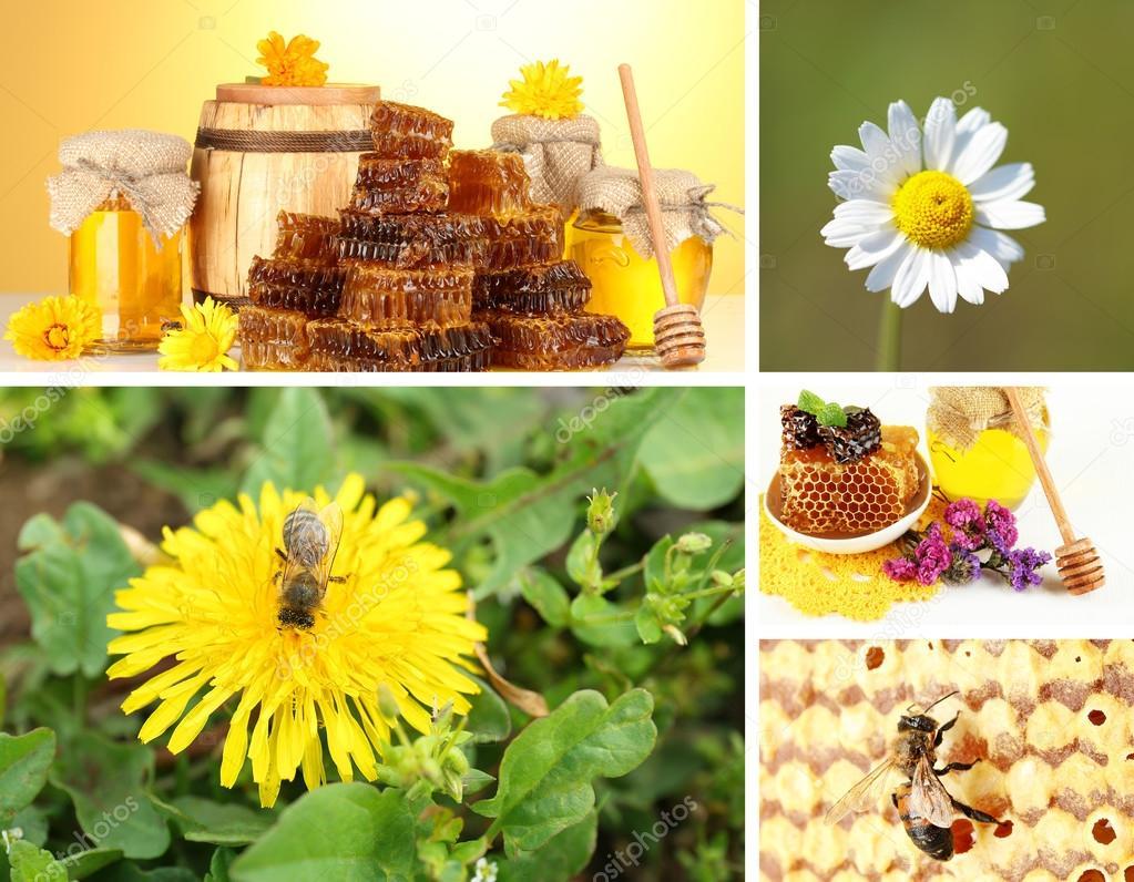 Beekeeping collage