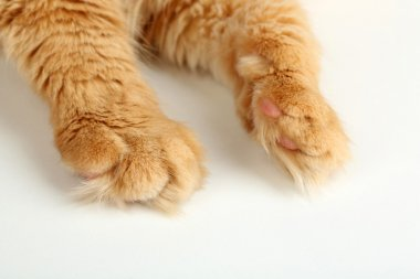 Red cat paw isolated on white background