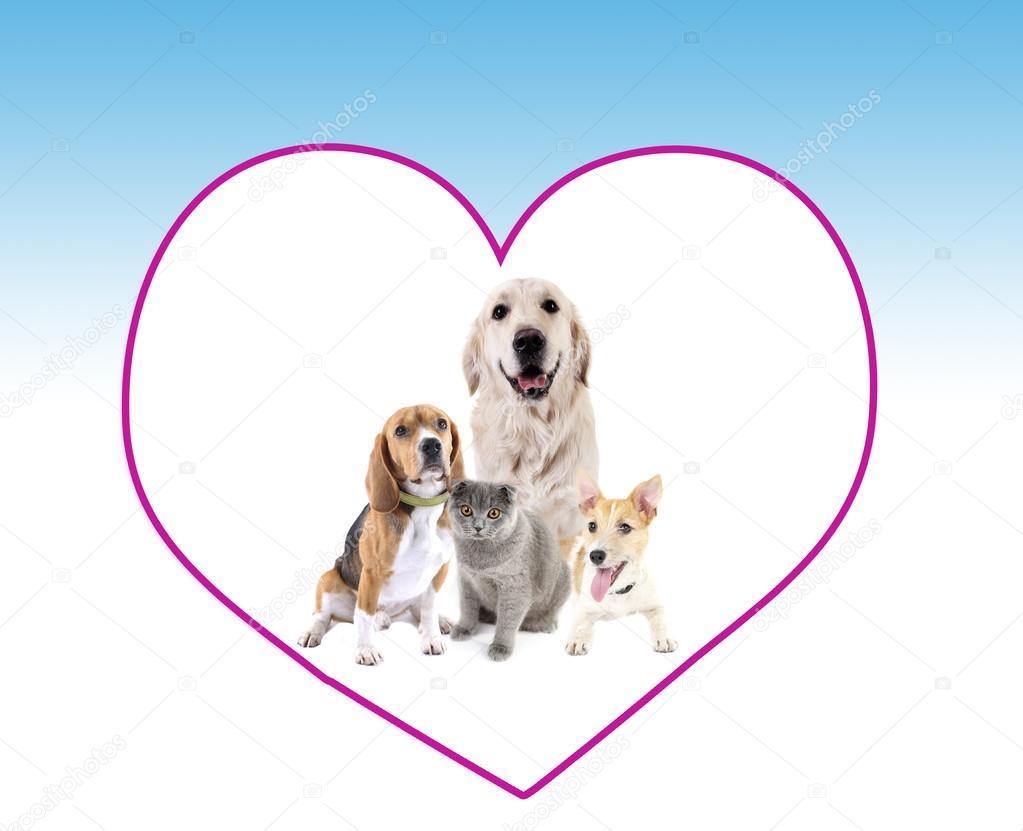 Cute mascotas en marco de gran corazón en fondo azul claro — Fotos ...