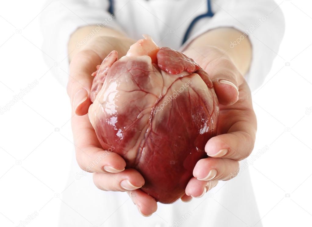 Сердце в руках хирурга картинки