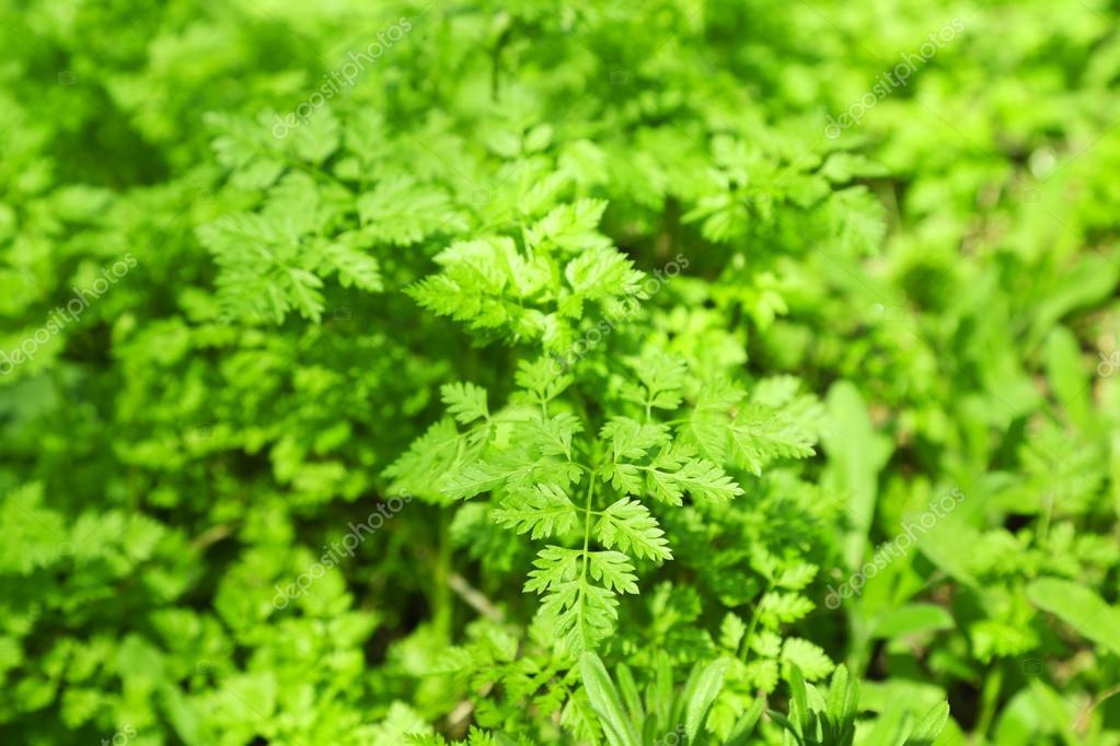 Exterior De Las Plantas Verdes Foto De Stock C Belchonock 73055635 - Plantas-verdes-exterior