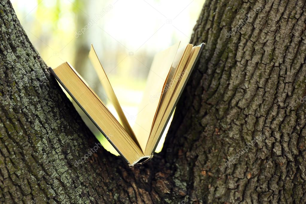 Book on tree, close-up