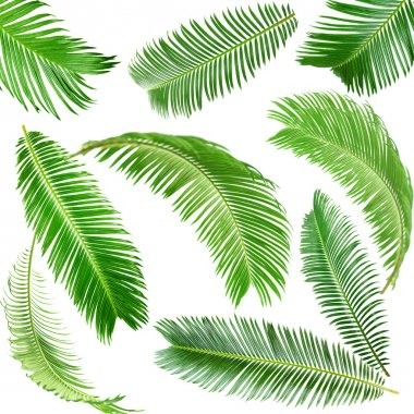 Green palm leaves isolated on white