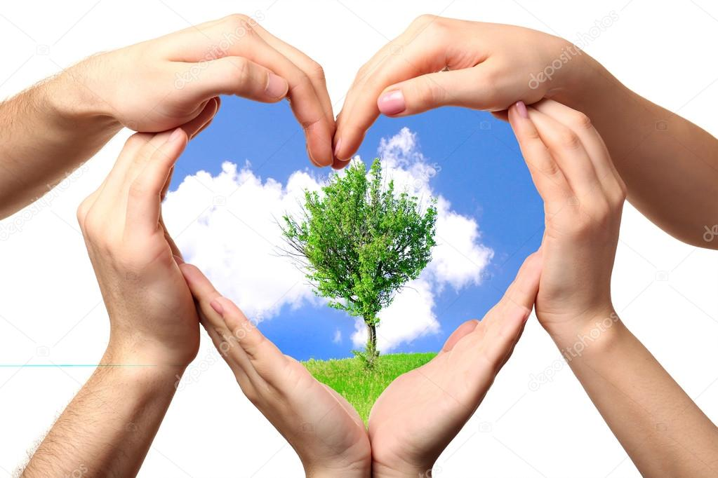Beautiful tree in heart formed by male and female hands isolated on white
