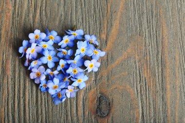Forget-me-nots blue flowers
