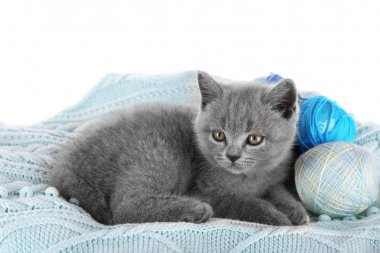 Cute gray kitten with skeins of thread
