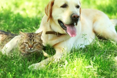 dog and cat resting