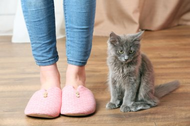 Cute gray kitten with owner on floor at home