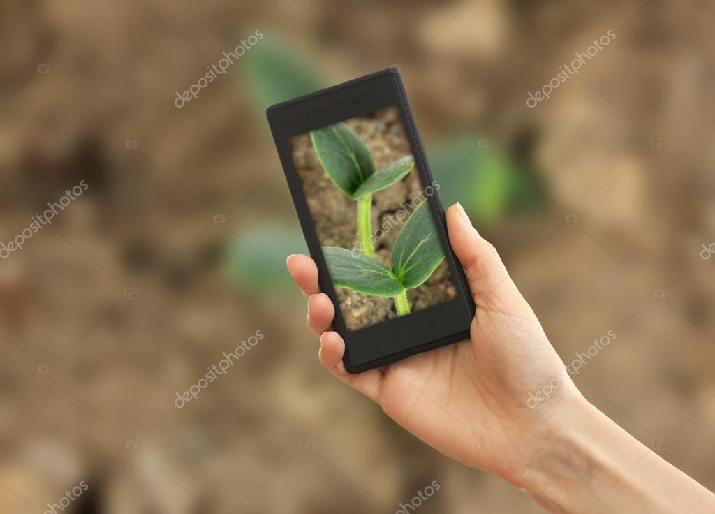 Verwenden Handy Zum Aufnehmen Von Fotos Von Grunen Keimling Im Boden