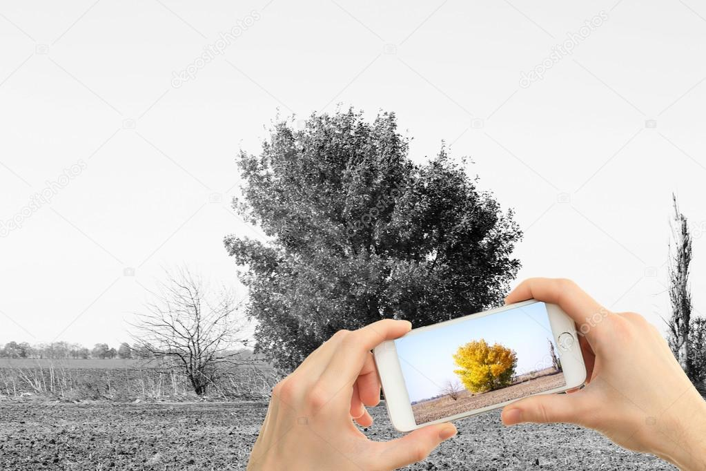 Hands taking photo of tree in field by smartphone