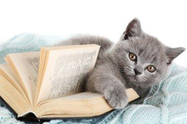 Cute gray kitten with open book