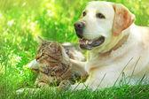 Fotografie Freundliche Hunde und Katzen, die ruhelosigkeit