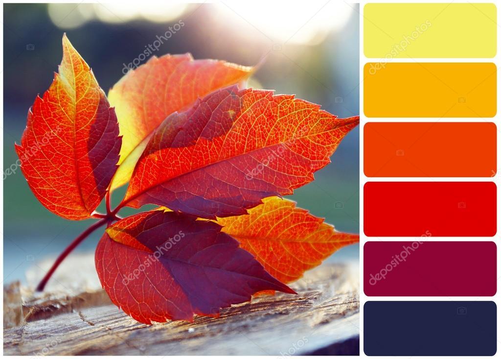 Schones Herbst Blatt Stumpf Und Farbpalette Stockfoto C Belchonock