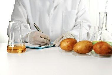 Scientist examines potatoes