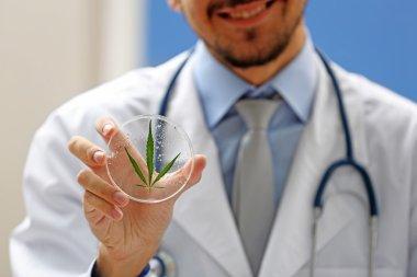 hand holding green cannabis