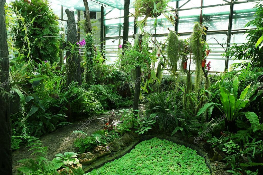 stausee und tropische pflanzen im gew chshaus im. Black Bedroom Furniture Sets. Home Design Ideas