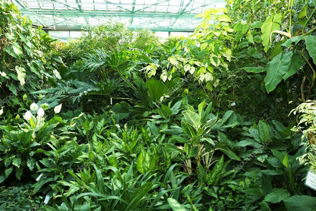 Tropische Pflanzen im Gewächshaus im Botanischen Garten — Stockfoto ...