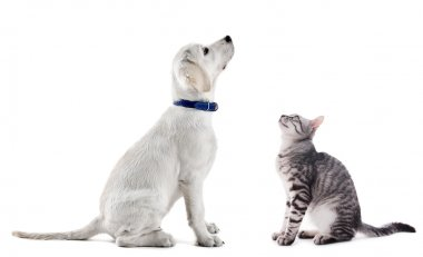 Cute dog and cat isolated on white