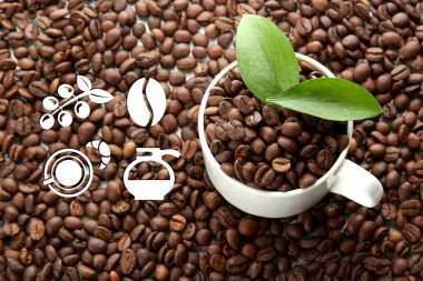 Coffee sign icons on coffee beans