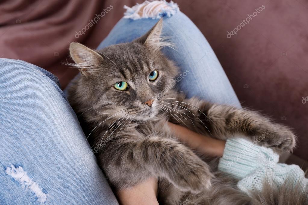 Текст песни ленивый кот