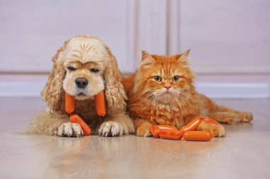 American cocker spaniel and red cat